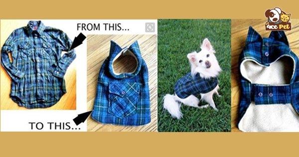 may áo cho chó mèo
